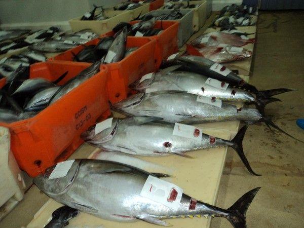 Le nouveau maire de taiarapu ouest page 67 for Vente de poisson rouge 75008
